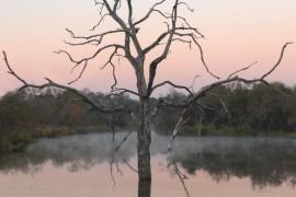 79_Londolozi-Lodge_Afrique-du-Sud_01