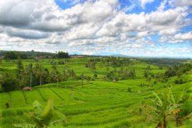 unesco-recognized-terraced-rice-field-at-jatiluwih